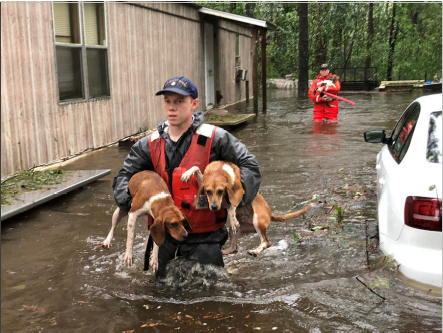 When disasters strike, people are not the only victims: reflections on the ethics of disasters and the animal ethics